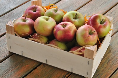 Świeże i aromatyczne jabłka to podstawa udanego cydru.